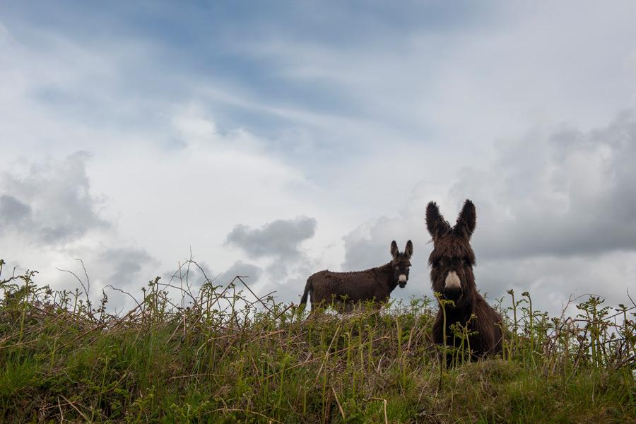 cashelfean-holiday-houses-donkeys-landscape-900x600