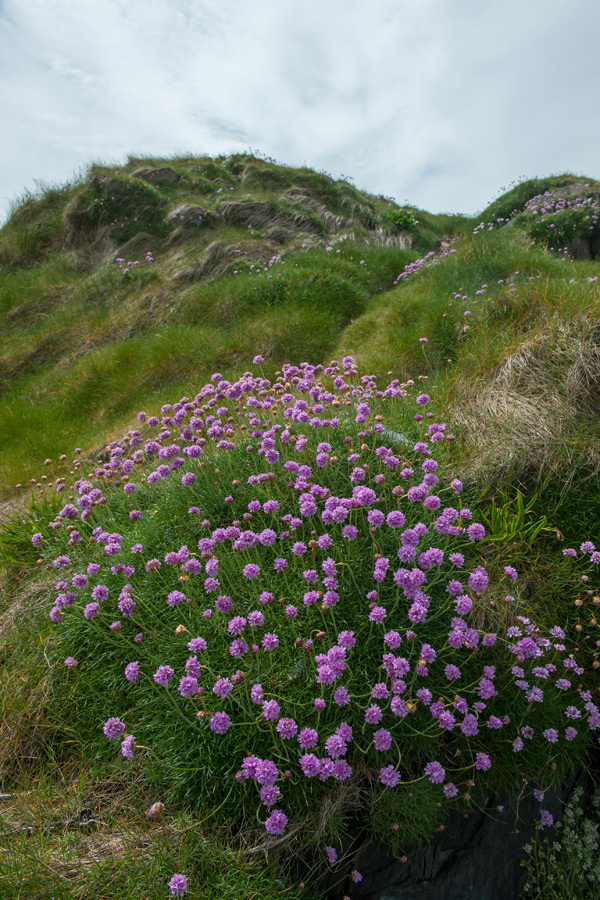 cashelfean-holiday-housesl-west-cork-landscape-wild-flowers-900x600